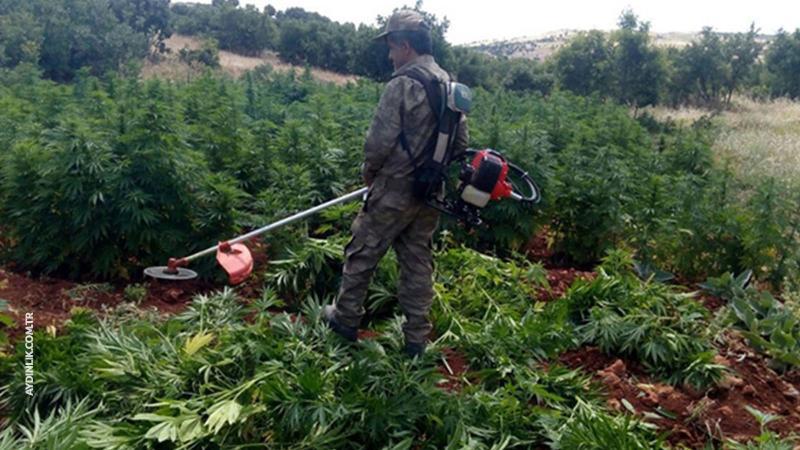 Terör örgütü PKK'ya uyuşturucu darbesi